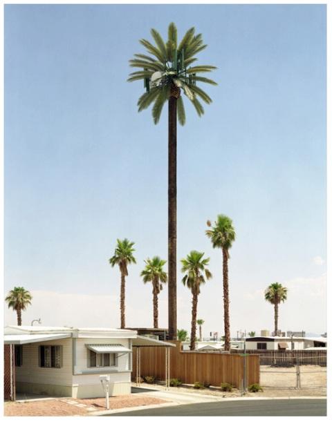 voit_palmtree